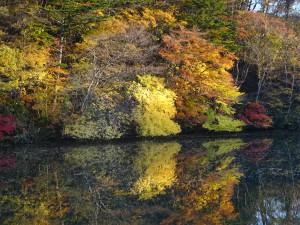仙台の紅葉